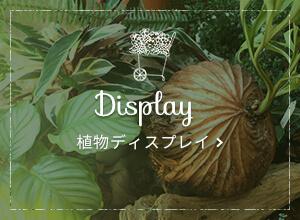 植物ディスプレイ