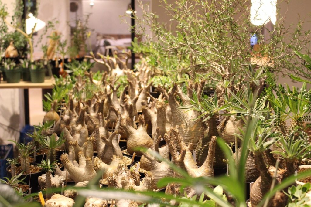 BOTTA 植物イベント