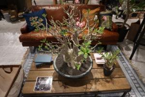 植物 ディスプレイ