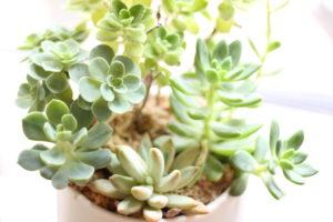 レンタル植物