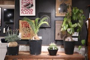 展示販売 植物イベント