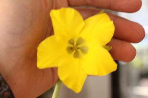 ホロンベンセ花