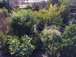根巻き 植木
